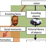 Selectivity in acquired prosopagnosia