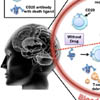 Selectively killing T-cells in multiple sclerosis: A brainy approach