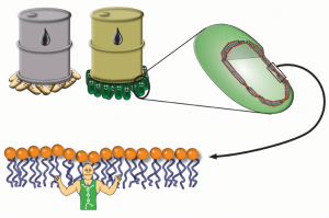 Fig. 1. COE1-5C locks the membrane molecules into higher stability so that the microbes can be more tolerant of butanol.