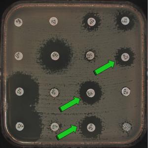 Susceptibility testing by disk diffusion of the enterobacterial strain producing the enzyme FRI-1. Paper disks contains several antibiotic molecules belonging to the ß-lactam family. AMC: amoxicillin/clavulanic acid, TIC: ticarcillin, PIP: piperacillin, PPT: piperacillin/tazobactam, CEF: cephalothin, CAZ: ceftazidime, TCC:ticarcillin/clavulanic acid, ETP: ertapenem, CTX: cefotaxime, AMC: amoxicillin/clavulanic acid, IPM: imipenem, FOX: cefoxitin, FEP: cefepime, ATM: aztreonam, MEM: meropenem, CXM: cefuroxime. Green arrows stand for resistance to the carbapenem molecules.