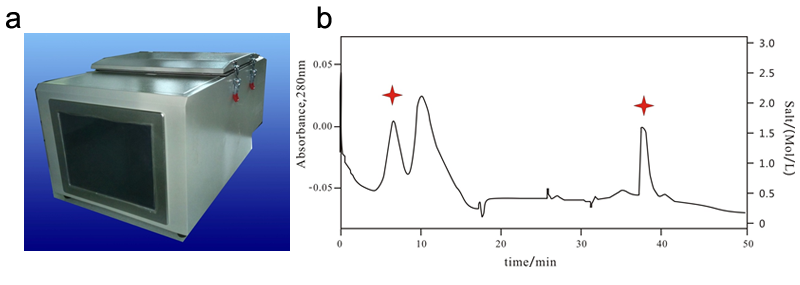 Fig. 2. a. Chromatogram of purification of Ribonuclease A in the crude extraction of bovine pancreas by online 2D-LC. Star, target product. b. Ribonuclease A purification from the crude extraction of bovine pancreas by online 2D-LC.