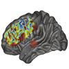 Investigating the neural mechanisms of speech: an electrophysiological study