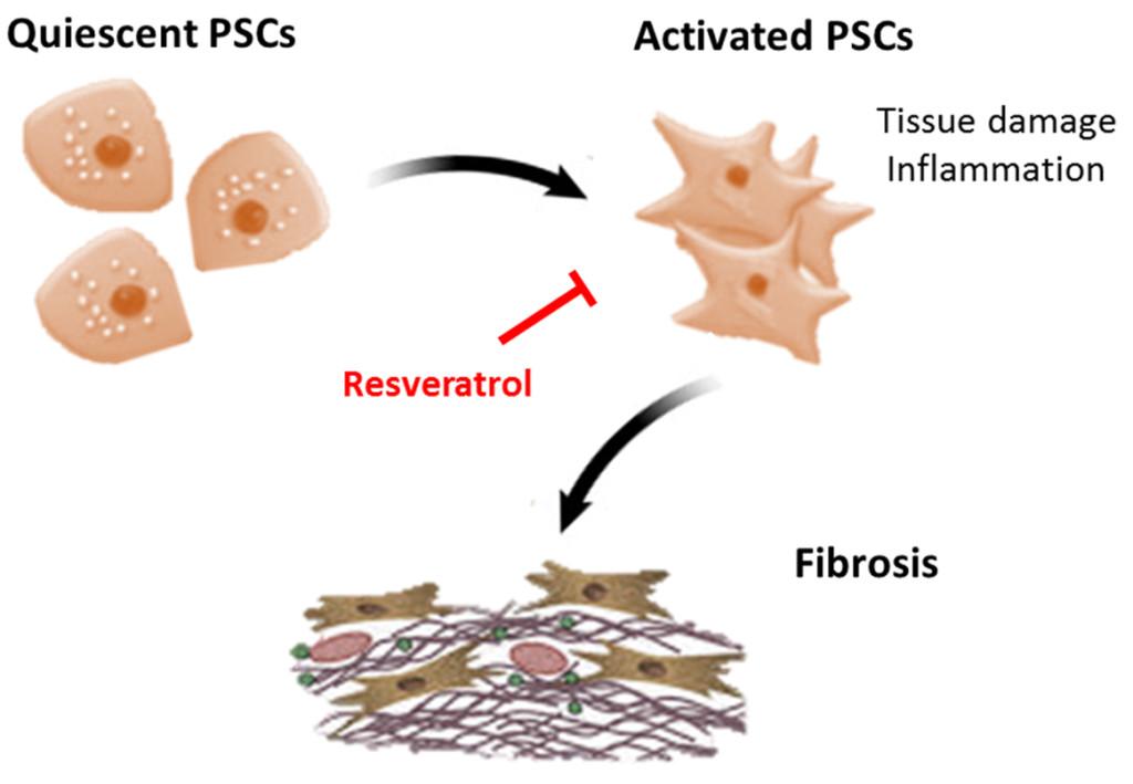 Fig-1-Fibrosis-Tsang