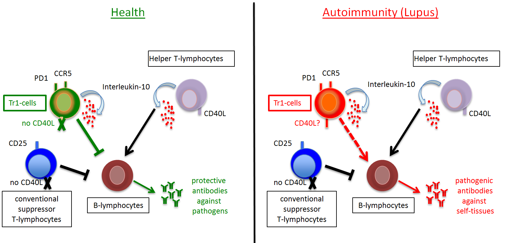 A functional defect of unconventional suppressor T-lymphocytes ...