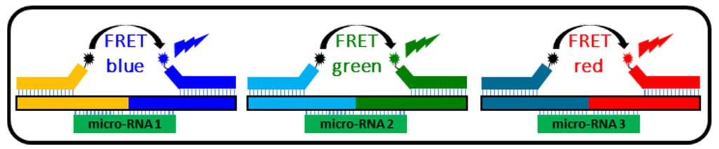 Fig. 2: Three-color FRET for the detection of three different micro-RNAs