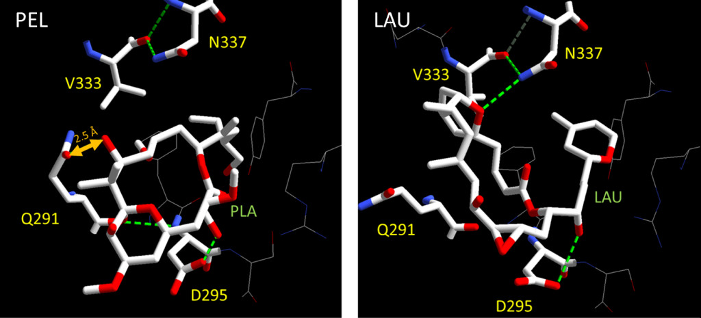Fig. 1. Location of Q291, V333, N337, and D295 βI-tubulin residues relative to peloruside (PEL) and laulimalide (LAU).