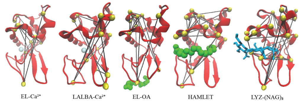 Network representation of the most important nodes of the selected protein–ligand system mapped onto a cartoon representation of the protein.