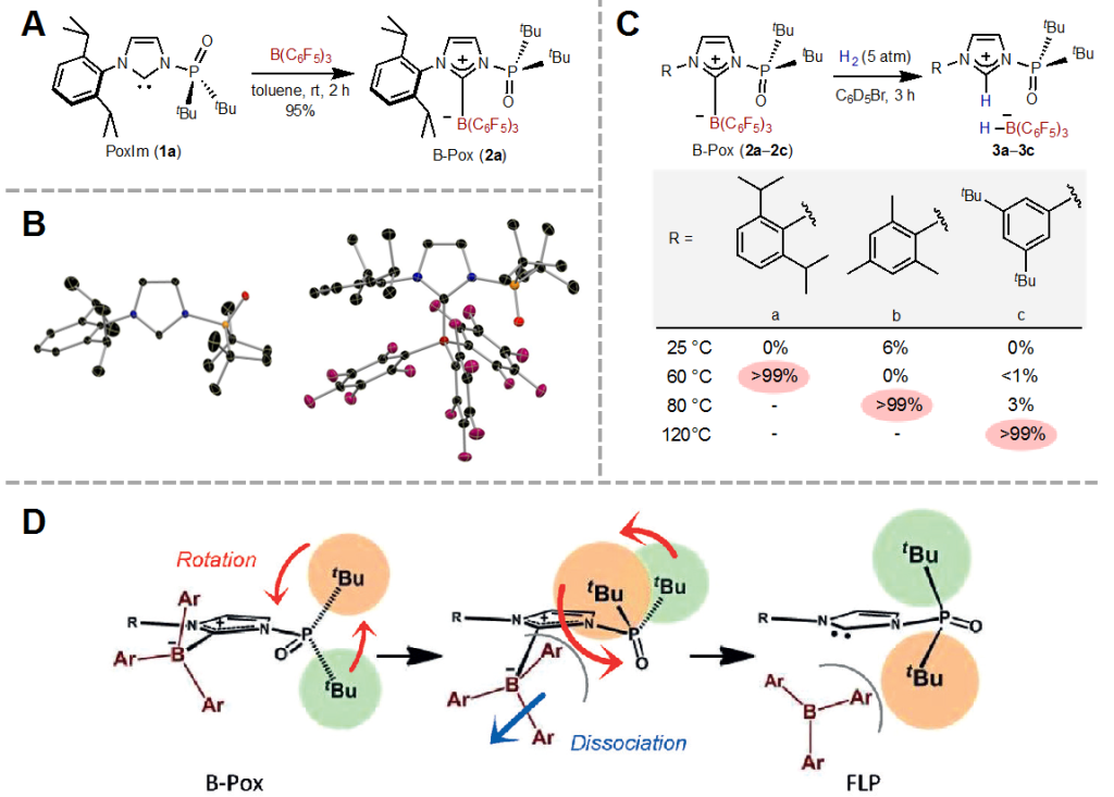 Fig. 2. (A) Synthesis of B-Pox. (B) Molecular structure of 1a (left) and 2a (right). (C) Thermally induced revival of FLPs and controlling revival conditions. (D) FLP revival process in this work.