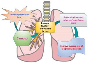 Fig2-Lung-Kawamura