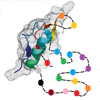 Two views on the protein folding puzzle