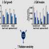 Chloroquine inhibits the malignant phenotype of glioblastoma