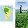 The role of the Amazonian forest in removing atmospheric mercury