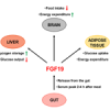 Metabolic regulation by the intestinal hormone FGF19: From basic science to clinical application