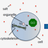 Pass the salt, please! Understanding how cells deal with high salt