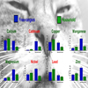 """Metal cats"": on the presence of chemical elements in feline reproductive system"