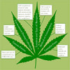 The safety and toxicology of cannabinoids