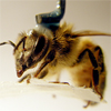 Bees get their 'fix' in virtual reality