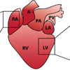 Characterisation of the human epicardium in the developing heart