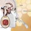 The resilient pituitary gland: What happens when the pituitary gland has to be cut during surgery?