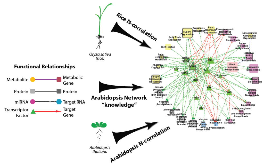 "Transfer nitrogen ""network knowledge"" from a dicot model plant to a crop (rice) (modified from Obertello et al., 2015)."
