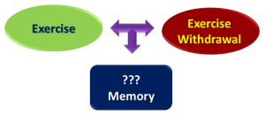 Fig. 1. Schematic diagram of exercise and exercise withdrawal on memory