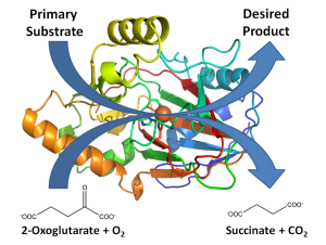 Fig. 1. Representative structure, active site, and general reaction of a 2-oxoglutarate dependent oxygenase.