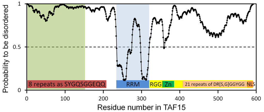 Fig. 2. Predictions of the residue status to be ordered or disordered with the IsUnstruct program for RNA-binding protein with prion-like domain (TAF15). The continuous line at 0.5 of the Y-axis is the threshold line for residues to be disordered. Prion-like domain is indicated by light green color. RRM is the RNA recognition motif. RGG corresponds region rich in arginine and glycine. Zn is the Zinc finger motif.