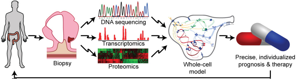 Fig. 2. Whole-cell models have the potential to enable precision medicine. In the future, clinicians could use patient-specific models informed by genomic data to design personalized prognoses and therapies.