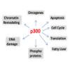 Chromatin remodeling regulates multiple liver functions