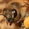 Neonicotinoid insecticides in the honey bee and bee products from hives in central Saskatchewan