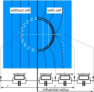 Fig. 2. Equipotential line distributions for a spherical single-shell model. Cell polarization is described by the difference of the potentials at the poles in the absence (left) and presence (right) of the cell. The internal field is constant for Maxwell's equivalent body (full white lines). The external field distributions of cell model and equivalent body are identical. The frequency dependence of the pole potential difference obtained from the RC-model (bottom) provides the impedance.
