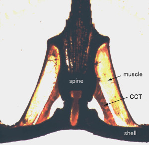 Spine joint cut in half along the spine axis