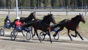 Fig. 2. Experimental horses during training. Photographer: Johanna Berg-Johansson.