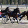 Race horses submitted to reduced training may show similar lactate threshold