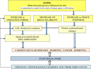Fig.1.The potential effect of chitosan on age-related dysfunctions.