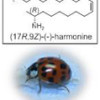 Harmonine – the defense compound of the Asian lady beetle is active against Leishmania major parasites