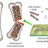 Clay nanotubes loaded with Sr(II) could help in designing composite scaffolds for bone regeneration