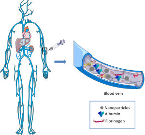 Fig. 1. Nanoparticles can bind to plasma proteins (albumin, fibrinogen, etc.) in the bloodstream. This figure was produced using Servier Medical Art.
