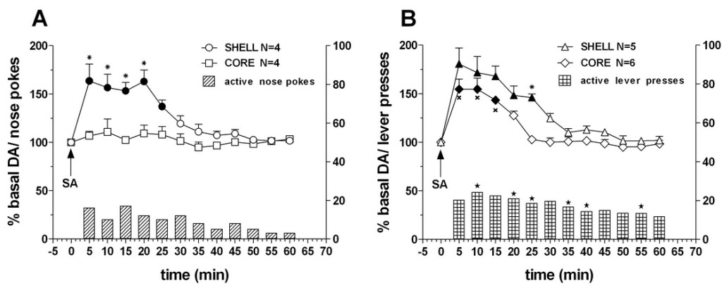 Fig. 1. Time-course of dialysate DA in the NAc shell and core and active nose-pokes (A) or lever presses (B) (bars, means of shell and core group) under FR1 nose poking or lever pressing for sucrose. Data are means ± SEM of the results, expressed as a percentage of basal, obtained in the number (N) of rats indicated in the figure.
