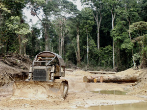 An industrial logging operation in the Congo Basin (photo by William Laurance).
