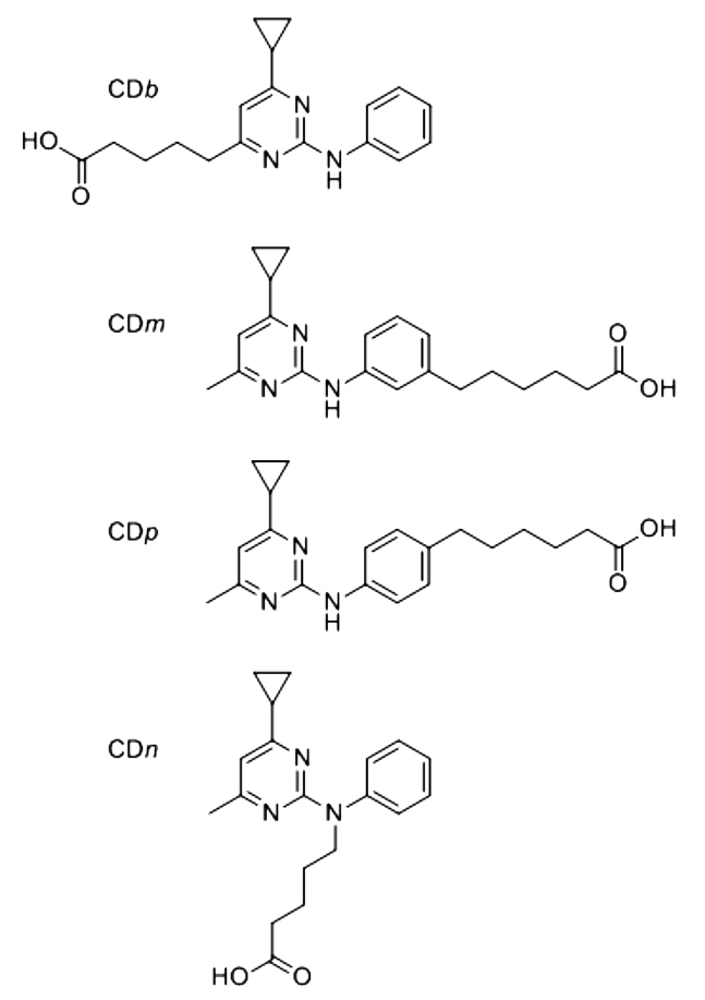 Fig. 1. Synthetic cyprodinil functionalized derivatives.
