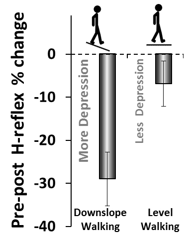 Effect of downslope and level walking on the H-reflex