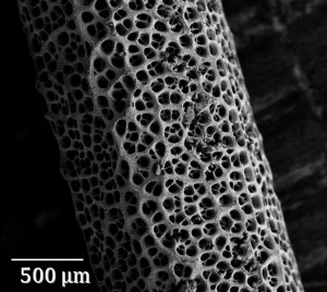 Fig. 2. A scanning electrode microscope (SEM) image of the highly porous gold electrode used in this work.