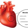 Secret of cardiovascular diseases (CVDs) hidden in small molecules