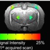 Utilizing multimodal MRI to detect somatosensory stimulation in the rabbit