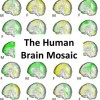Human brains do not belong to two distinct types: 'female brains' and 'male brains'