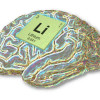 How can lithium prevent stroke – Is the inner cell layer of our vessels the key?