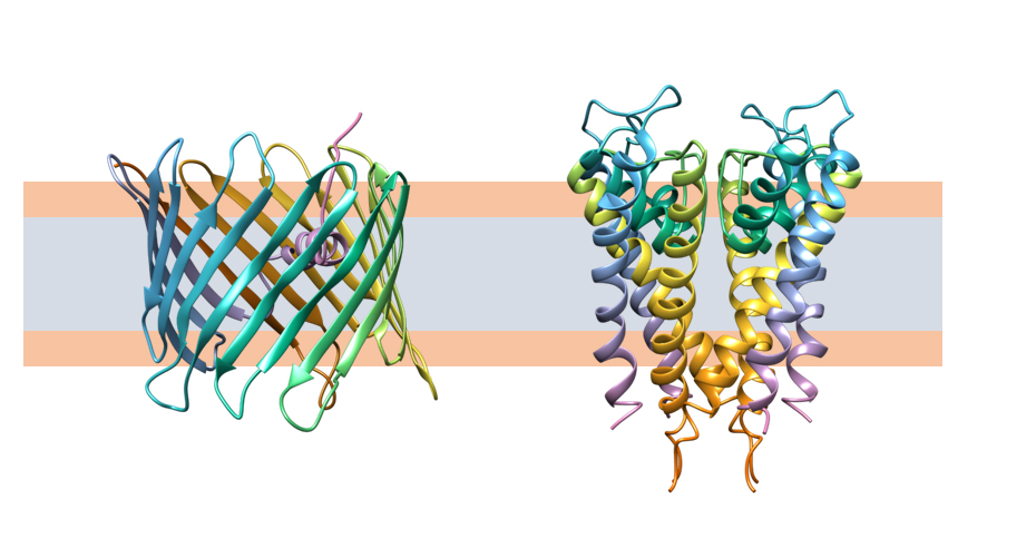 Channels in artificial membranes   Atlas of Science