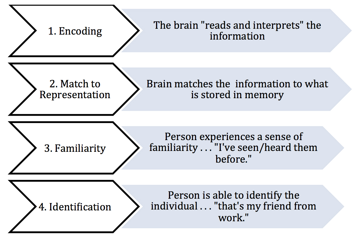 Who Is That Person Exploring How The Brain Organizes Information
