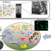 Fluorescent carbon dots integrated hydrogels for lung cancer therapy